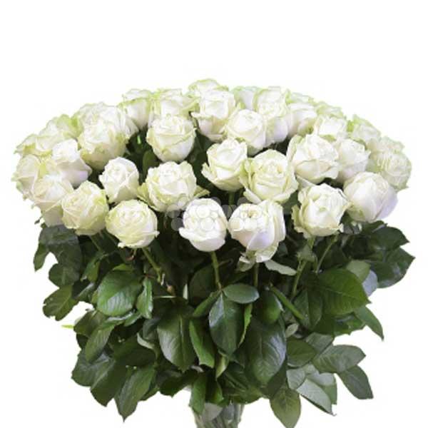 BUNCH OF 50 WHITE ROSES - Love & Romance - in Sri Lanka