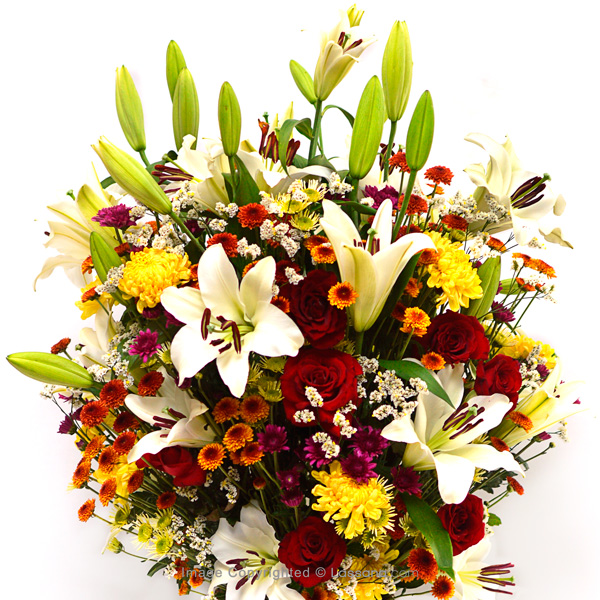 FLORAL PARADISE - Lovely Lilies - in Sri Lanka