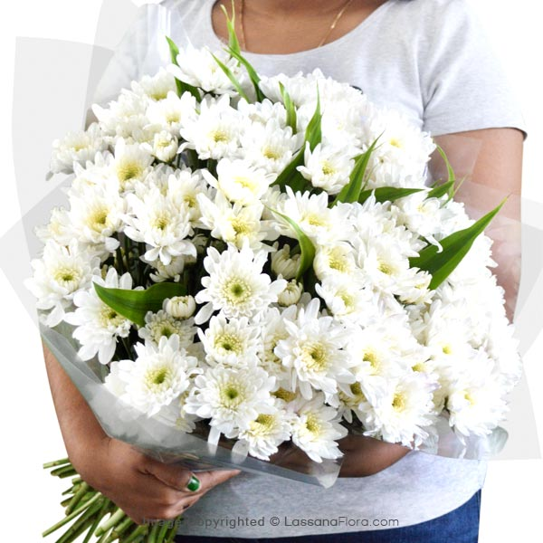 WHITE HAPPINESS - Exotic Chrysanthemums - in Sri Lanka