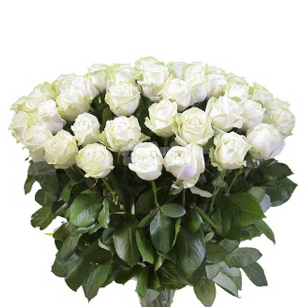 BUNCH OF 50 WHITE ROSES - Love & Romance - in Sri Lanka