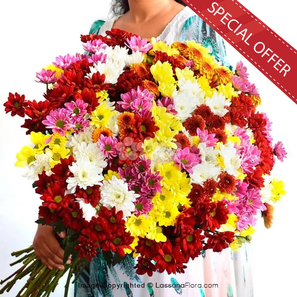 100 STEMS OF CHRYSANTHEMUM - Congratulations - in Sri Lanka
