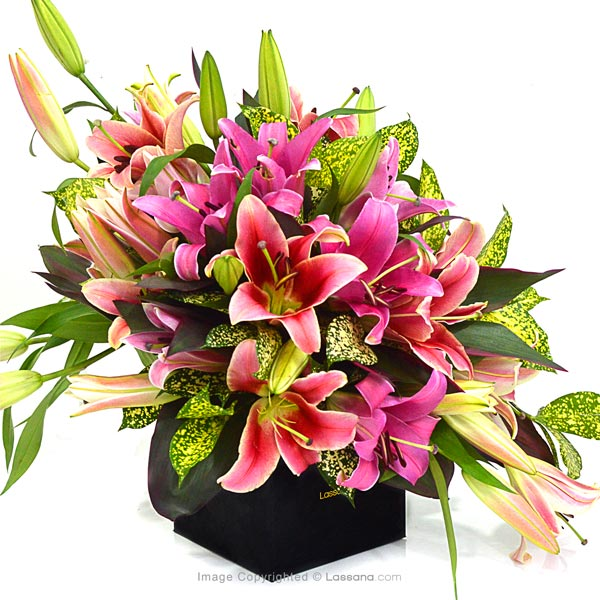 Pink Confetti ( Pink Lilies ) - Lovely Lilies - in Sri Lanka