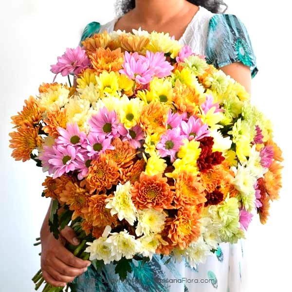 50 Stems of Chrysanthemum - Thank You - in Sri Lanka