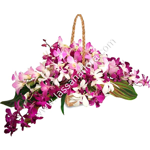 ELEGANT ORCHID - Corporate Gifting - in Sri Lanka