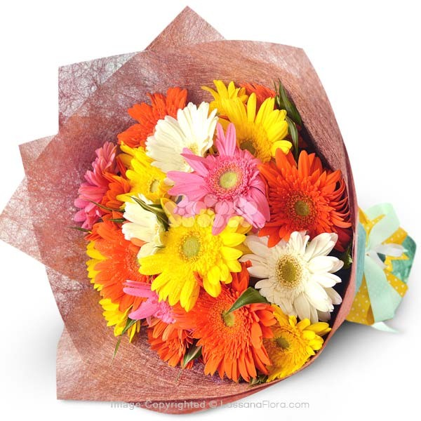 BOUQUET OF 20 GERBERAS - New Born - in Sri Lanka